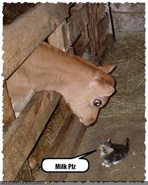 Milk Plz