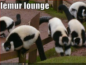 lemur lounge