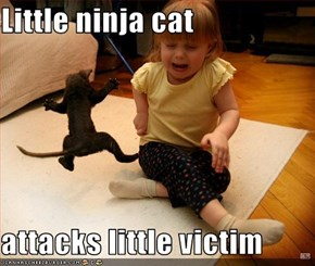 Little ninja cat  attacks little victim