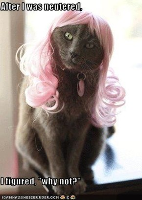 """After I was neutered,  I figured, """"why not?"""""""