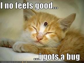 I no feels good...  ...i gots a bug