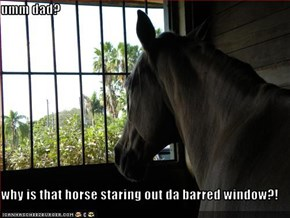 umm dad?  why is that horse staring out da barred window?!