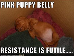 PINK PUPPY BELLY  RESISTANCE IS FUTILE.....