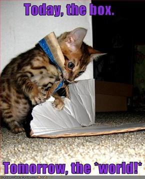 Today, the box.     Tomorrow, the *world!*