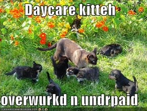 Daycare kitteh  overwurkd n undrpaid