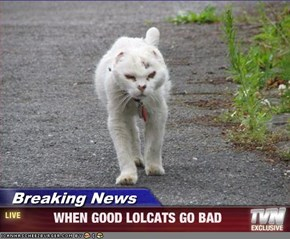 Breaking News -         WHEN GOOD LOLCATS GO BAD