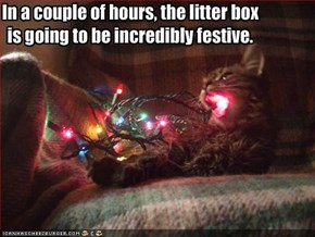 In a couple of hours, the litter box