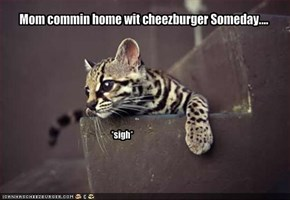 Mom commin home wit cheezburger Someday....