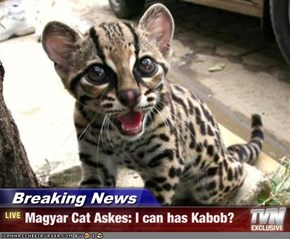 Breaking News - Magyar Cat Askes: I can has Kabob?