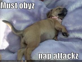 Must obyz  nap attackz