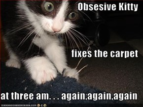 Obsesive Kitty fixes the carpet at three am. . . again,again,again