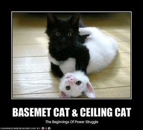 BASEMET CAT & CEILING CAT