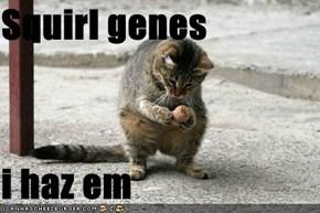 Squirl genes  i haz em