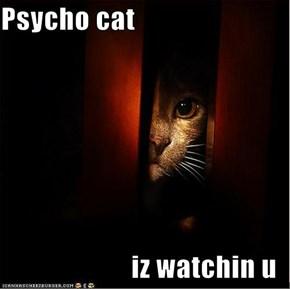 Psycho cat   iz watchin u