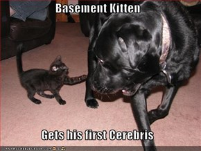 Basement Kitten  Gets his first Cerebris