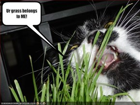 Ur grass belongs to ME!