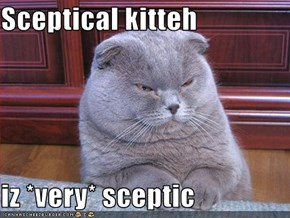 Sceptical kitteh  iz *very* sceptic