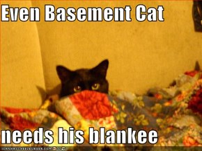 Even Basement Cat  needs his blankee