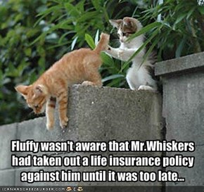Fluffy wasn't aware that Mr.Whiskers had taken out a life insurance policy against him until it was too late...