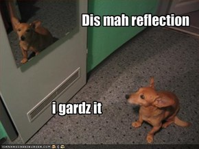 Dis mah reflection