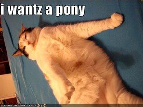 i wantz a pony