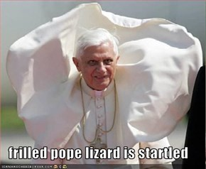 frilled pope lizard is startled