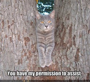 You have my permission to assist.