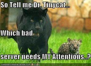 So Tell me Dr. Tinycat... Which bad server needs MY Attentions..?
