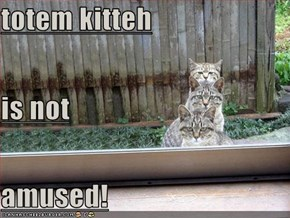 totem kitteh is not amused!