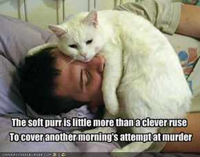 The soft purr is little more than a clever ruse