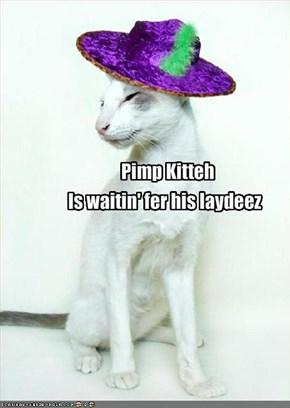 Pimp Kitteh