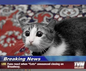 "Breaking News - Fans react when ""Cats"" announced closing on Broadway."