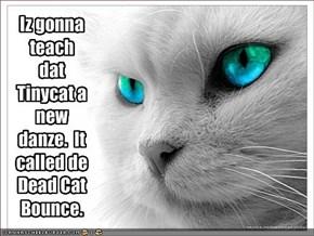 Iz gonna teach dat Tinycat a new danze.  It called de Dead Cat Bounce.