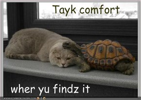 Tayk comfort