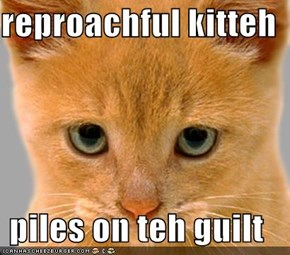 reproachful kitteh  piles on teh guilt