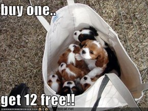 buy one..  get 12 free!!