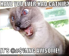 HAVE YOU EVER HAD CATNIP?!  IT'S @#$%ING AWSOME!