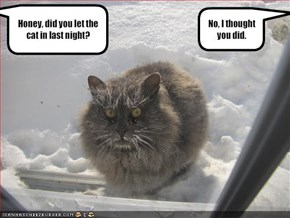 Honey, did you let the cat in last night?