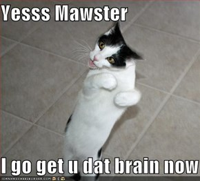 Yesss Mawster  I go get u dat brain now