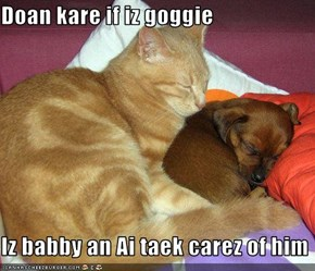 Doan kare if iz goggie  Iz babby an Ai taek carez of him