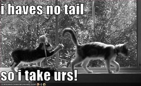 i haves no tail  so i take urs!