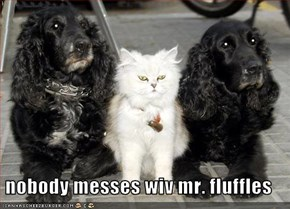 nobody messes wiv mr. fluffles