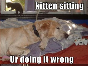 kitten sitting  Ur doing it wrong