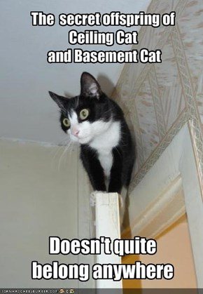 The  secret offspring of Ceiling Cat and Basement Cat
