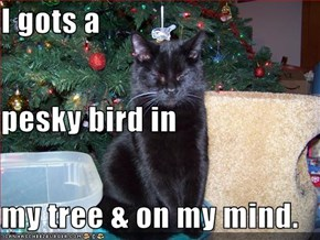 I gots a pesky bird in my tree & on my mind.