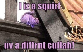 I iz a squirl  uv a diffrnt cullah!