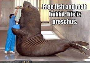 Free fish and mah bukkit: life iz preschus.