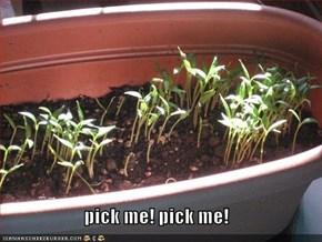 pick me! pick me!