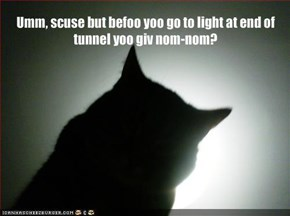 Umm, scuse but befoo yoo go to light at end of tunnel yoo giv nom-nom?