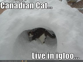 Canadian Cat...  Live in igloo...
